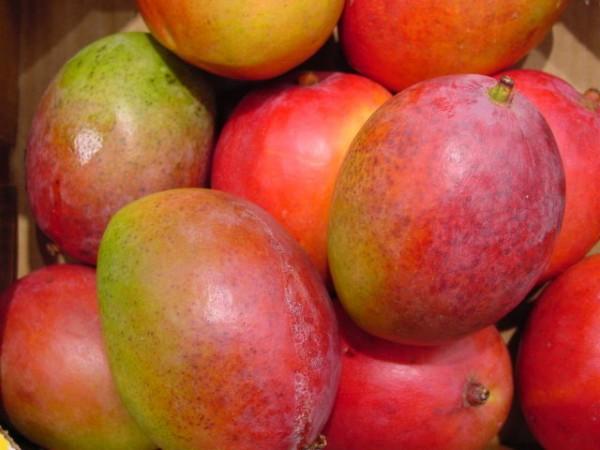 Offiziell bestätigt – Mango kommt in 1-2 Wochen